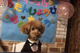 ☆アイドル犬☆