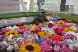 群馬県の総社神社に行ってきました