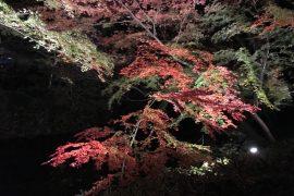 六義園・夜の紅葉🍁