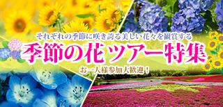お花見ツアー特集